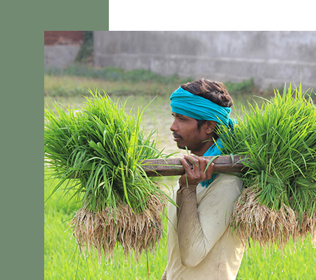 Agri Innovation in Pakistan - Report